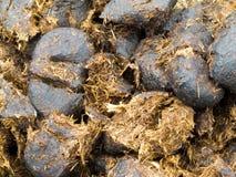 Close-up koński nawozu tła tekstury wzór Zdjęcia Stock