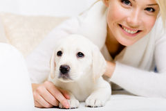 Close up of labrador puppy lying on the sofa Stock Photo