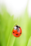 Close-up of ladybird Stock Image