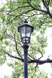 Close up Lamp in garden Stock Photo