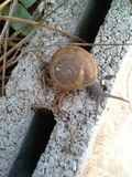 Close up Land snail Royalty Free Stock Photography