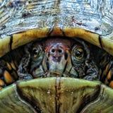 Close-Up Land Turtle Stock Photo