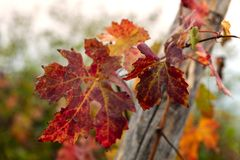 Close up of autumn foliage royalty free stock photography