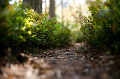 Close up lane in forest Royalty Free Stock Photography