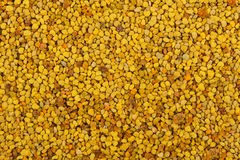 Close up of large bee pollen.  stock image