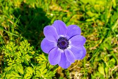 Large purple flower. Close up of a large purple flower royalty free stock photography