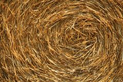 Close up of a large, round wheat hay bale. Agricultural background texture Stock Photo