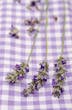 Close up lavender in vertical format stock photo