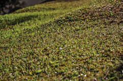 Close-up of lawn covered by morning frost, near Monte Alegre do Sul. In the countryside of São Paulo State, a region rich in agricultural and livestock Royalty Free Stock Photo
