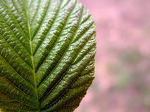 Close up of leaf. Leaf for pattern stock images