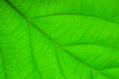Close up leaf Stock Image
