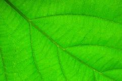 Close up leaf Stock Image