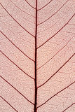 Close up of leaf. Texture Stock Images