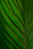 Close-up of leaf Royalty Free Stock Images