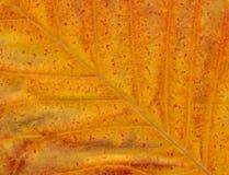 Close up Leaf. Leaf Detail royalty free stock images