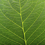 Close up of leaf Stock Image