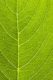 Close up of a leaf Stock Photo