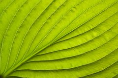 Close-up leaf Royalty Free Stock Photography