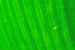 Close up of leaf Royalty Free Stock Photo