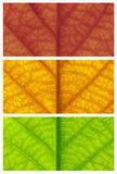 Close-up leaf in autumn colors Royalty Free Stock Photography