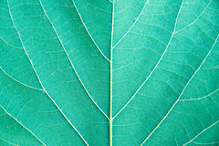Close up leaf detail Emerald tone filter style Royalty Free Stock Photography