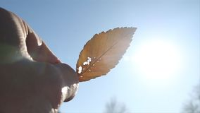 Close up of a Leaf in Fall. For those who love fall or just want a cool shot. Here is a shot of a leaf