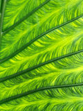 Close-up of a leaf Stock Photos