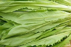 Leaf lettuce Royalty Free Stock Images