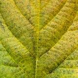 Close up leaf pattern. Stock Photo