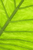 Close up of leaf pattern Royalty Free Stock Photo