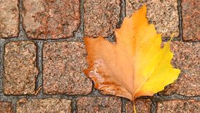 Close up of Leaf on the Road stock footage