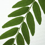 Close up of leaf segment Royalty Free Stock Photography