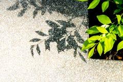 Close up leaf on sidewalk background Royalty Free Stock Image