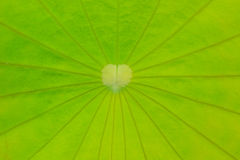 Close up leaf textures Royalty Free Stock Photo