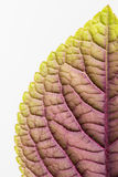 Close up of leaf underside Royalty Free Stock Images