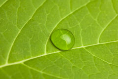 Close up of a leaf and water droplet Stock Images