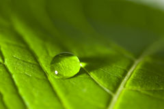 Close up of a leaf and water droplet Royalty Free Stock Photos