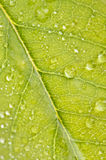 Close Up Leaf & Water Drops Stock Photography