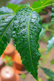 Close up of a leaf Royalty Free Stock Photography