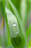 Close-up of a leaf and water drops Royalty Free Stock Photos