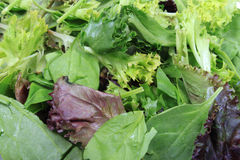 Close up of leafy greens Royalty Free Stock Photography
