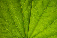 Close up of Leaves Stock Photo
