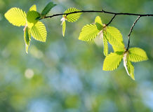 Close up of Leaves Stock Photography