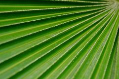 A close-up of the leaves of a palm tree. The close-up of the leaves of the palm tree is very beautiful Stock Photography