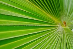 A close-up of the leaves of a palm tree. The close-up of the leaves of the palm tree is very beautiful Stock Image