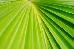 A close-up of the leaves of a palm tree. The close-up of the leaves of the palm tree is very beautiful Royalty Free Stock Image