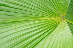 A close-up of the leaves of a palm tree. The close-up of the leaves of the palm tree is very beautiful Stock Images