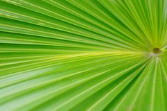 A close-up of the leaves of a palm tree. The close-up of the leaves of the palm tree is very beautiful Royalty Free Stock Photography