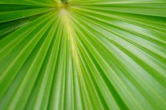 A close-up of the leaves of a palm tree. The close-up of the leaves of the palm tree is very beautiful Royalty Free Stock Images