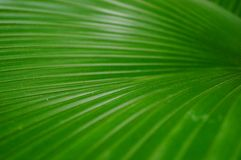 A close-up of the leaves of a palm tree. The close-up of the leaves of the palm tree is very beautiful Royalty Free Stock Photos